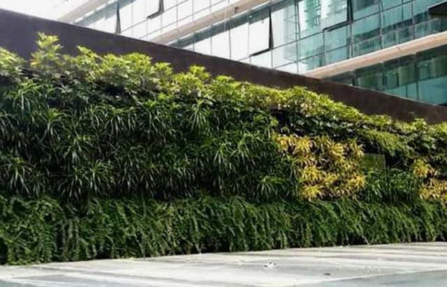 Hospital Green Wall
