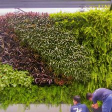 Huge Residential Green Wall