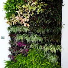 Small Residential Green Wall In A Condominium